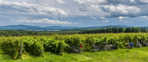 Biking the Townships' wine route En libert�